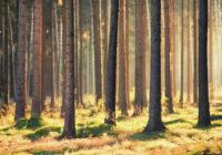 Japanci nas uče: Pola sata u dubokoj šumi štiti dva mjeseca vaš imunitet!