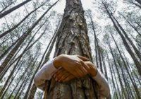 Zagrlite svoje drvo i iscijelite se prirodnom energijom
