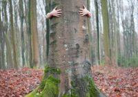 Drvo daje energiju: Pronađite svoje po horoskopskom znaku i saznajte zašto i kako ih grliti