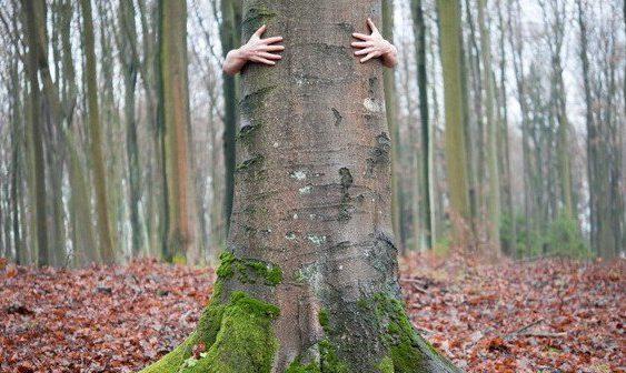 treehug-701x336