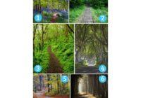 TEST: 6 staza vodi na 6 sudbinskih puteva – Koji vi birate?