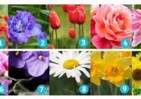 Cvijet koji vas zove, krije vašu esenciju života – Nama je totalno pogodilo!