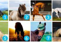 Koji konj vam je najljepši? Vaš izbor otkriva što tražite i hoćete li to uskoro dobiti!