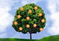 Drvo želja: Zamislite želju, odaberite plod i saznajte što vas čeka!