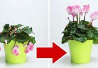 3 sastojka koji će vratiti život vašem omiljenom cveću.
