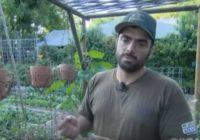 Na zemljištu od 4 ara se obogatili: Ovo može da uradi svako ko ima dvorište! (FOTO)