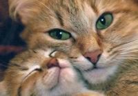 ISTRAŽIVANJA SU DOKAZALA: Mačke leče ljude!