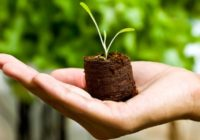 Nevjerojatna metoda liječenja: Prebacite svoju bolest u zemlju sa sjemenom!