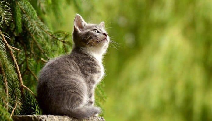 Znanstvenici dokazali: Vaša mačka može vidjeti stvari koje su vama nevidljive!