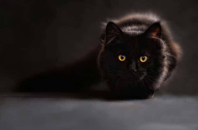 Duhovno značenje-Šta znači kada ugledate crnu mačku ?